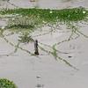 7-7-2009 Tybee Island 001