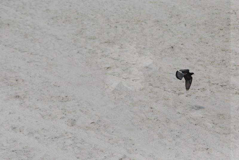 Tybee Island Fun 7-6-2009-7-7-2009 254