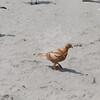 Tybee Island Fun 7-6-2009-7-7-2009 407