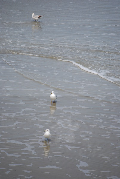 tybee island 3-7-2010 158