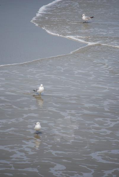 tybee island 3-7-2010 156
