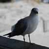 tybee island 3-7-2010 061