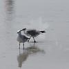 Tybee Island Fun 7-6-2009-7-7-2009 395