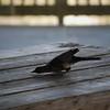 Tybee Island Fun 7-6-2009-7-7-2009 170