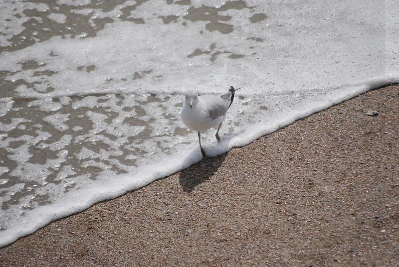tybee island 3-7-2010 145
