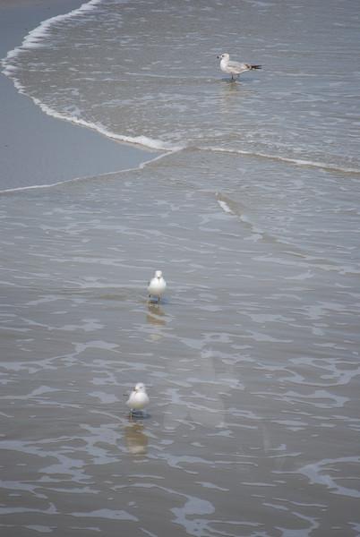 tybee island 3-7-2010 157