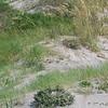 7-7-2009 Tybee Island 007