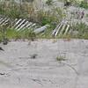 7-7-2009 Tybee Island 009