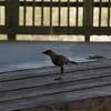 Tybee Island Fun 7-6-2009-7-7-2009 142