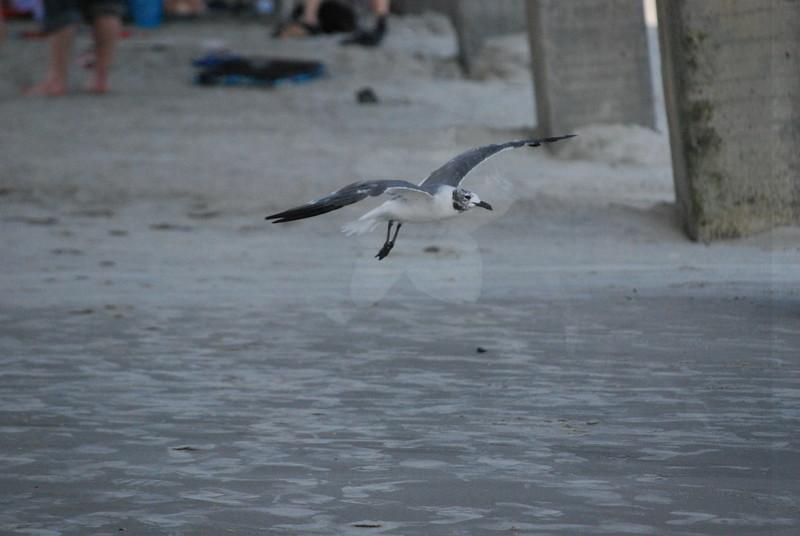 Tybee Island Fun 7-6-2009-7-7-2009 398
