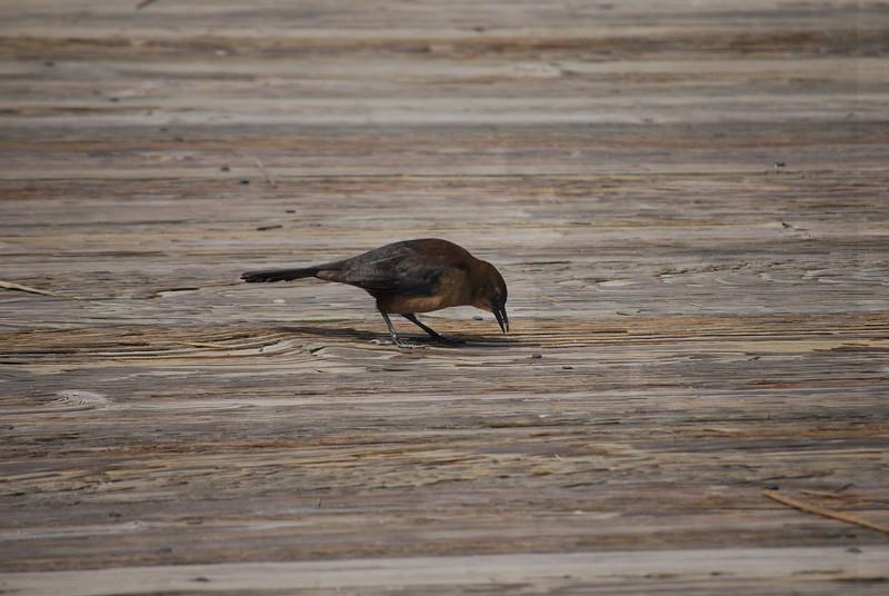 tybee island 3-7-2010 184