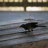 Tybee Island Fun 7-6-2009-7-7-2009 167