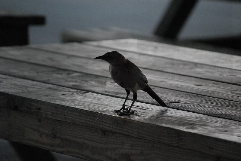 Tybee Island Fun 7-6-2009-7-7-2009 093
