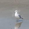 Tybee Island Fun 7-6-2009-7-7-2009 361