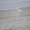 tybee island 3-7-2010 137