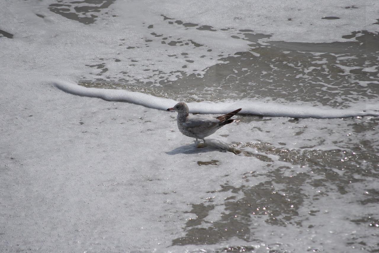 tybee island 3-7-2010 142