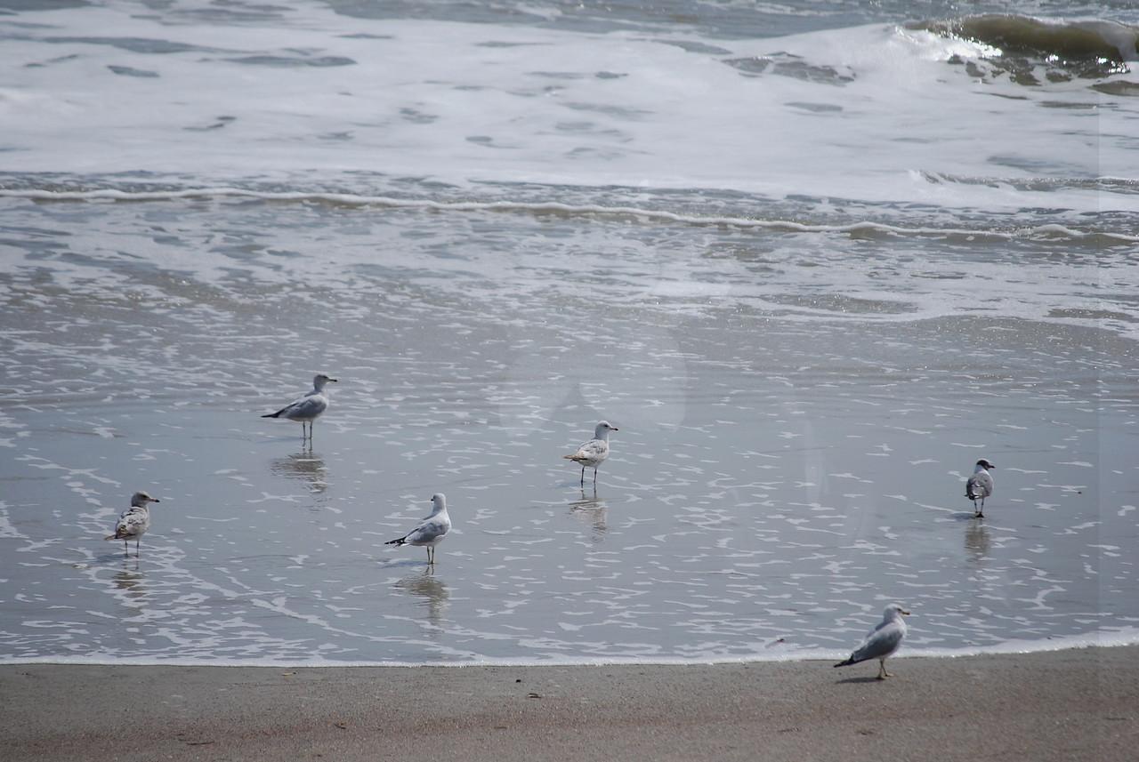 tybee island 3-7-2010 135