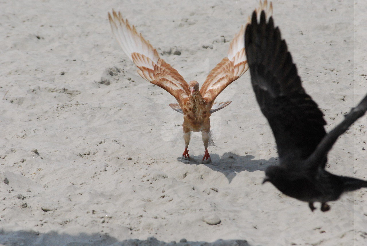 Tybee Island Fun 7-6-2009-7-7-2009 409