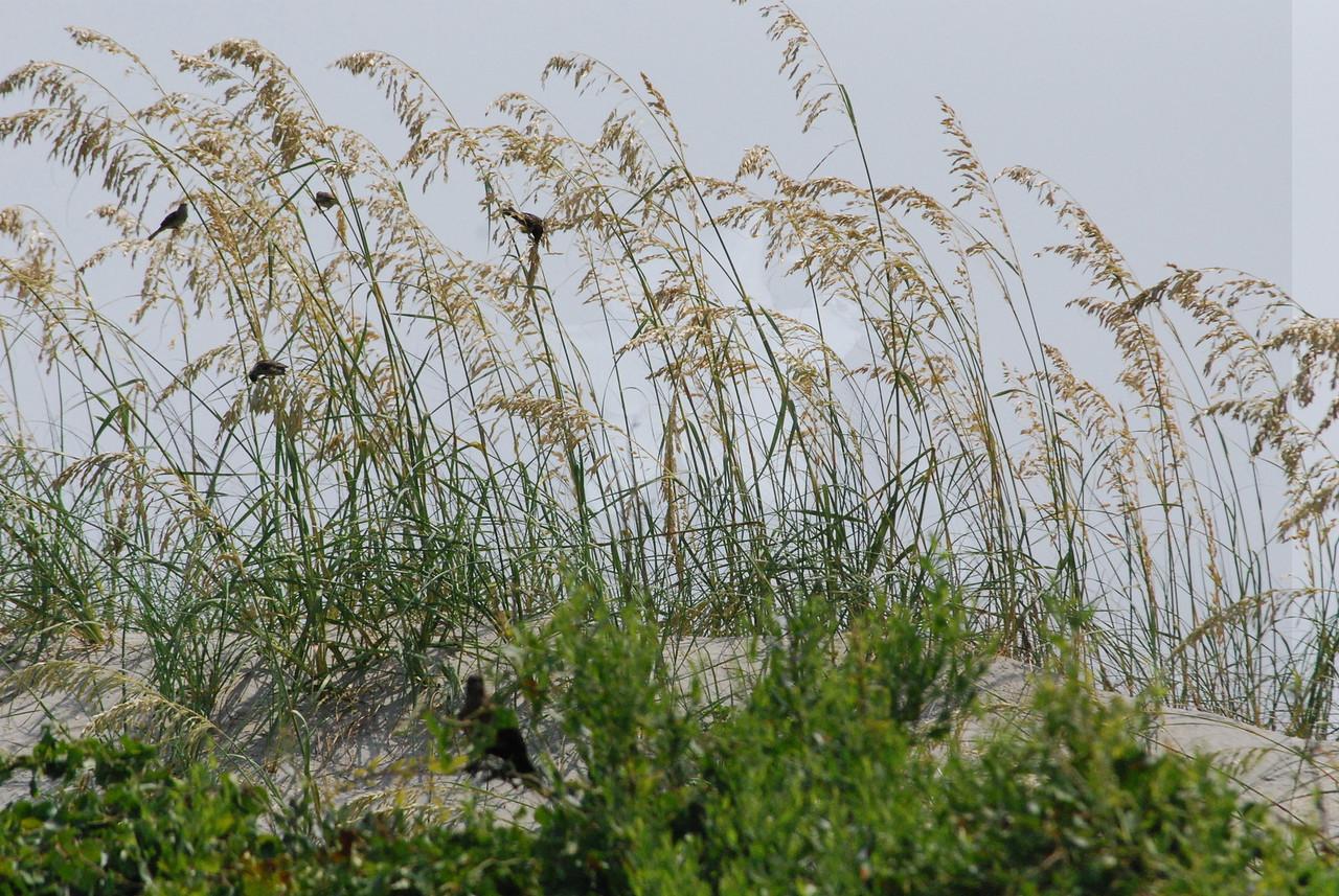 7-7-2009 Tybee Island 012