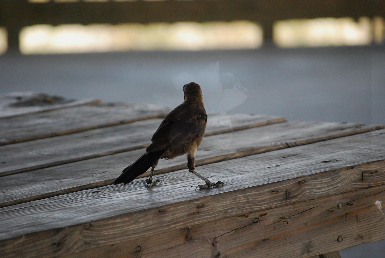 Tybee Island Fun 7-6-2009-7-7-2009 209