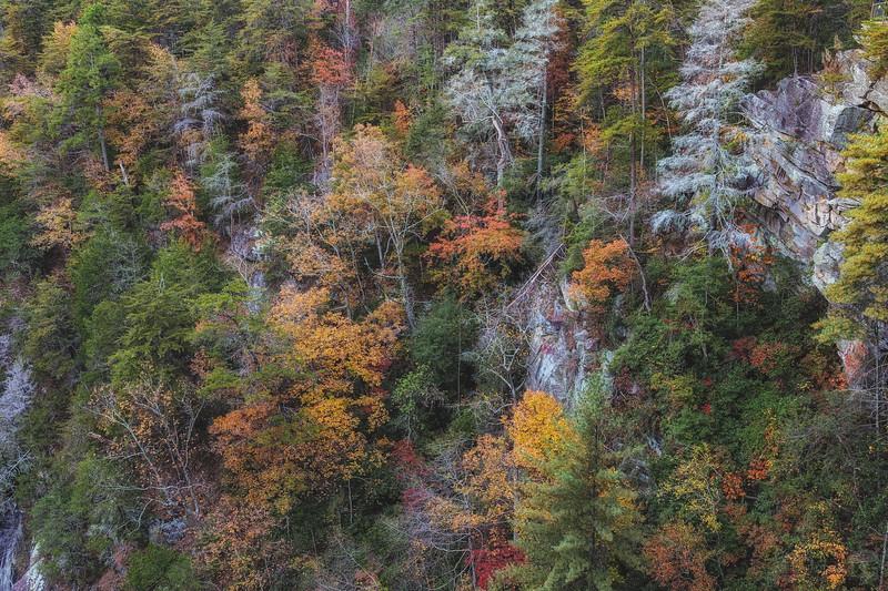 Autumn Slope