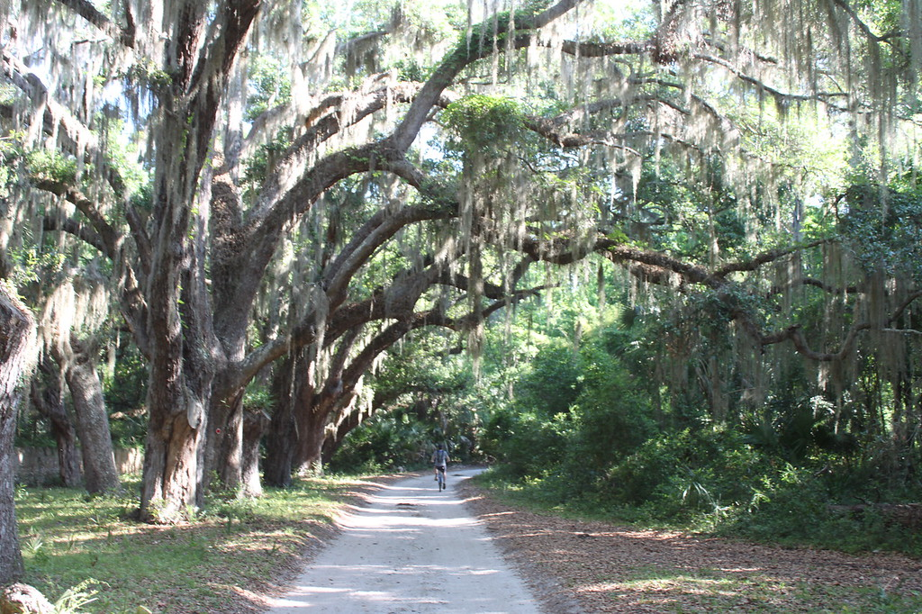 A person bikes down a sandy, tree-lined path on Cumberland Island.