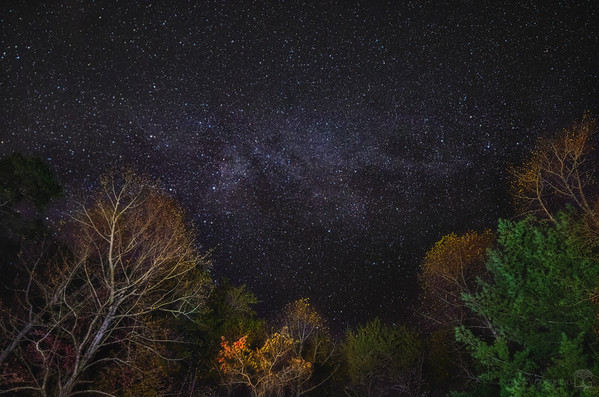 Fall colors under the Milky Way