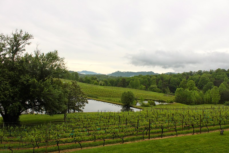 georgia wine country