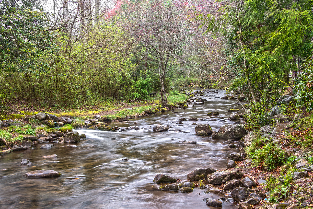 Rainy Morning at Moccasin Creek