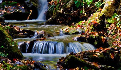 Leafy Waters