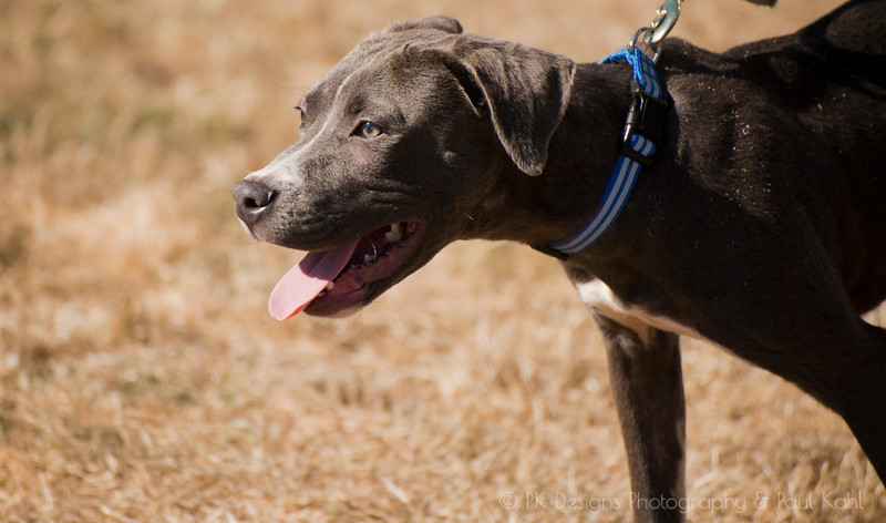 Charlie is an energetic pup with an amazingly sweet disposition!