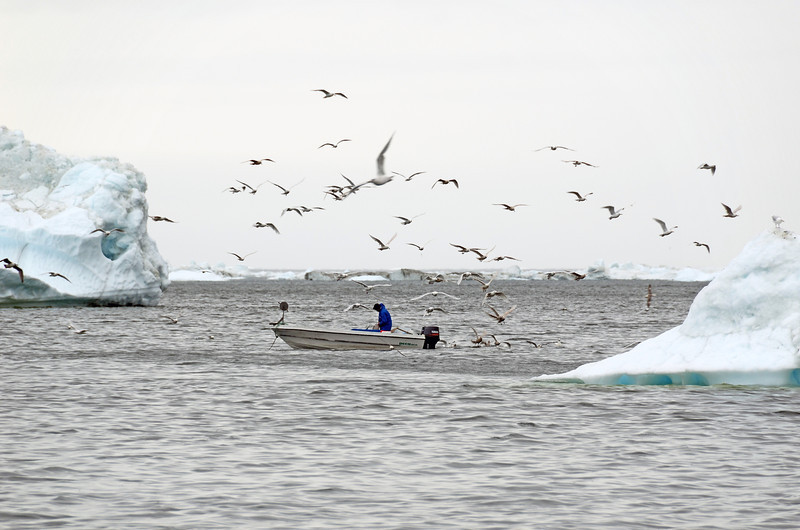 Halibut fisherman in Disko Bay, west Greenland