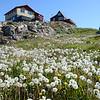 Midsummer in Aasiaat, west Greenland