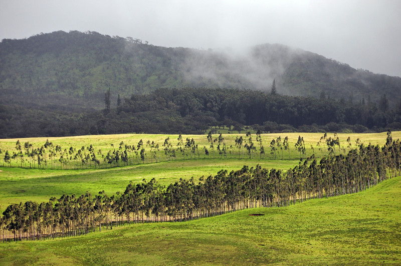 Mountain slope near Waimea on Big Island, Hawaii