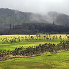 Mountain slope near Waimea on Big Island, Hawaii