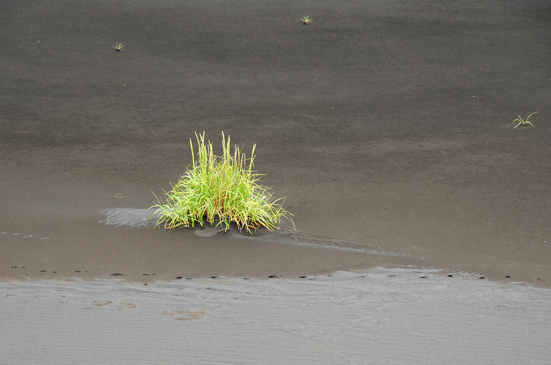 Lonely plant and fresh fox tracks in volcanic sediments, southern Iceland
