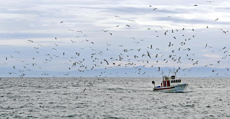 Fishing boat returning to Lipari island, Italy