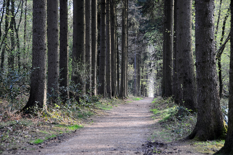 Forest path in Limburg, The Netherlands