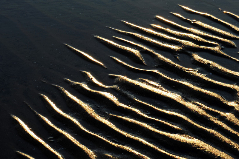 Sandy beach ripples at low tide, The Netherlands