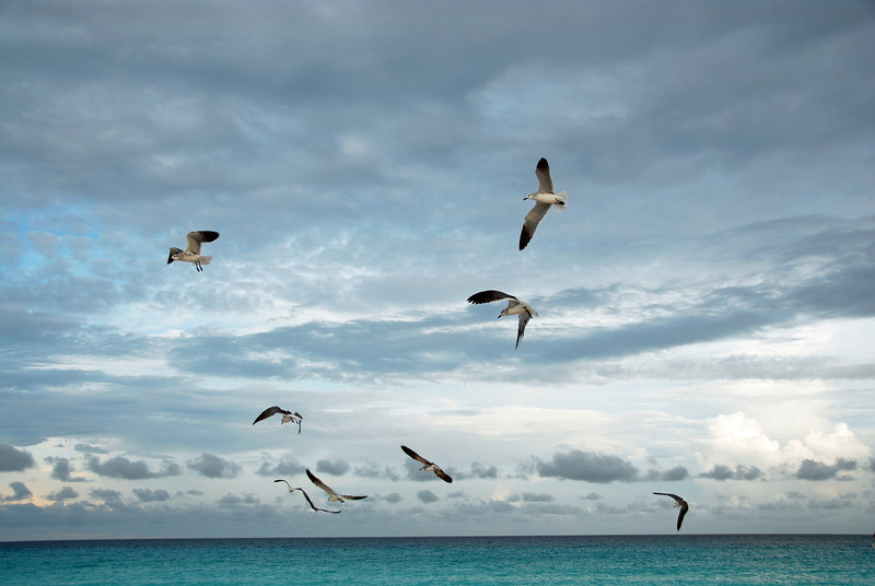 Seagulls along the Yucatan coast, Mexico