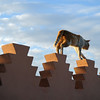 Cat on roof terrace wall in Marrakesh, Morocco