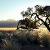 Early morning glow over grassy plains and isolated hills, Namibia