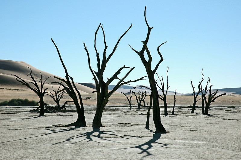 Fossil forest of camel thorn trees at Deadvlei, Namibia