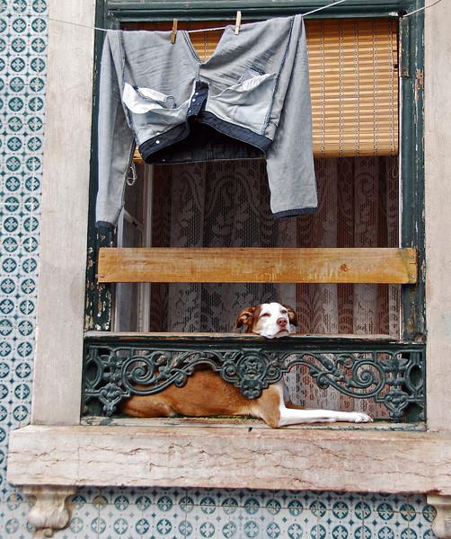 Window scene in Lisbon, Portugal