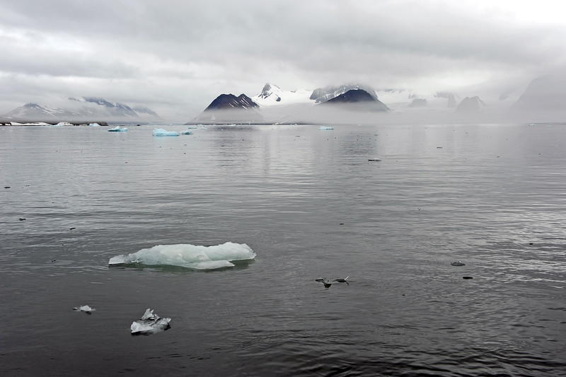Foggy afternoon in the outer Hornsund, Svalbard