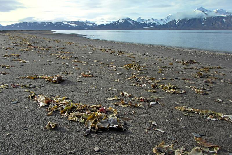 Beach along the north side of the Van Keulenfjorden, Svalbard
