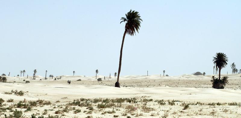 Desert scenery near Ghidma, Tunisia