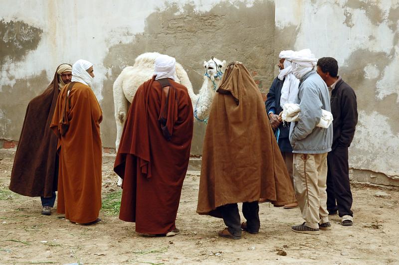 Local farmers admiring young white camel at livestock market in Douz, Tunisia