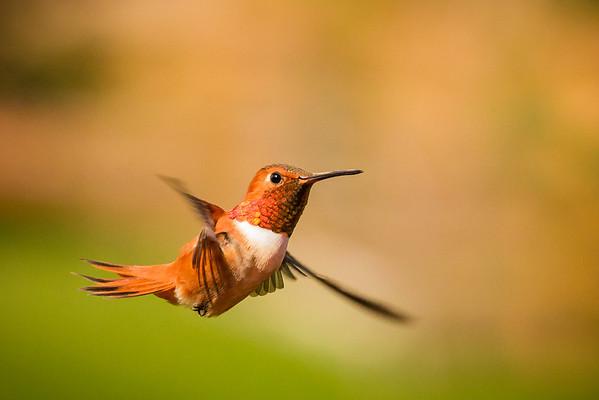 Gerlach Hummingbird Workshop