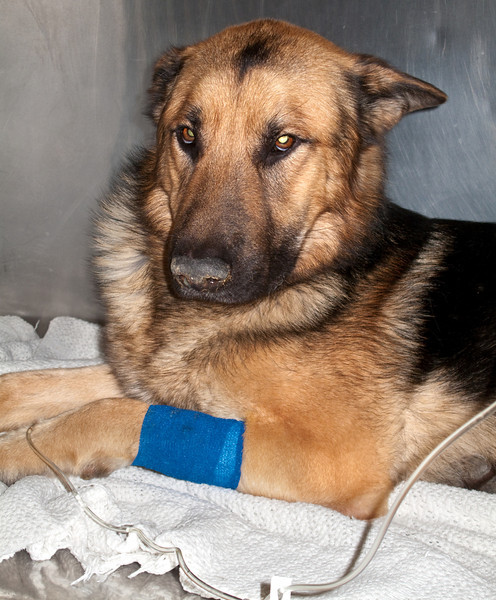 JUST AFTER BEING RESCUED--TRYING TO STAY ALIVE